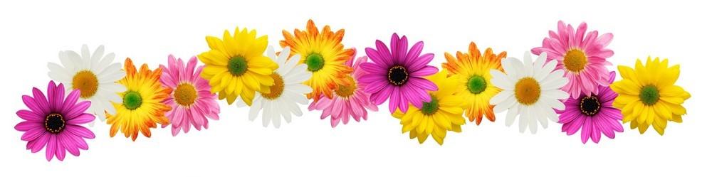 flower-banner